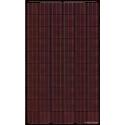 BISOL Solarmodule SPECTRUM BMU-250 Rote
