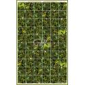 BISOL Solarmodule SPECTRUM BMU-250 Grün